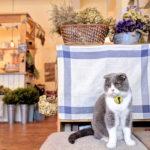 新竹咖啡 X Lambkin Cafe X 小羊咖啡館裡有隻貓